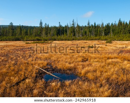 Peat bog near Jizerka Village, Czech Republic - stock photo