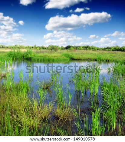 peat bog - the national park - stock photo