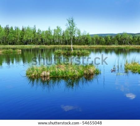 peat lake - morass in reservation Sumava, Czech Republic, Europe - stock photo