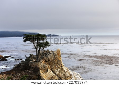 PEBBLE BEACH, CALIFORNIA - SEPTEMBER 25, 2014 : The public golf course of Pebble Beach, near Monterey, California, USA,   september 25, 2014,  in  Monterey, California, USA