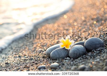 Pebble on the beach with plumeria flower  - stock photo