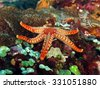 pebble red seastar on colorful...
