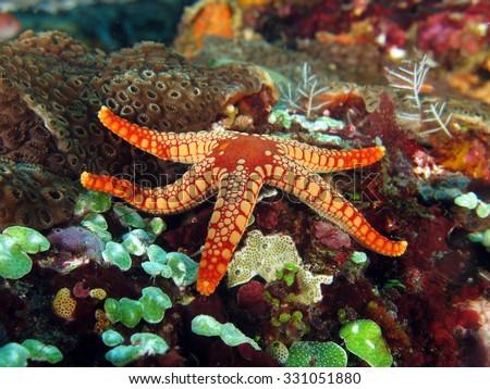 Pebble red seastar on colorful seafloor - stock photo