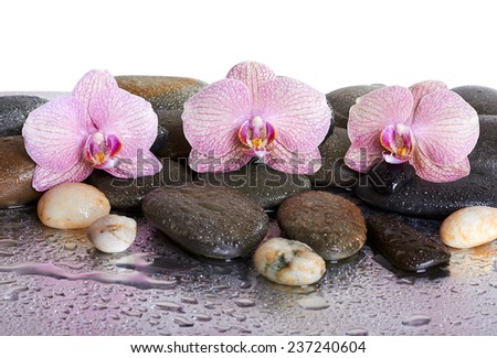pebbles and orchids on wet background  - stock photo