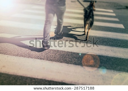 Pedestrian crossing. A young man passing through the street with a dog - stock photo