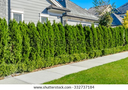 Pedestrian sidewalk at the empty street with nicely trimmed bushes, green fence in a nice neighborhood in the suburbs of Vancouver, Canada. Landscape design. - stock photo