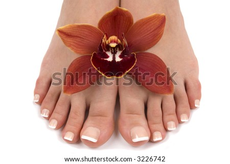 Pedicured feet with beautiful fresh orchid - stock photo