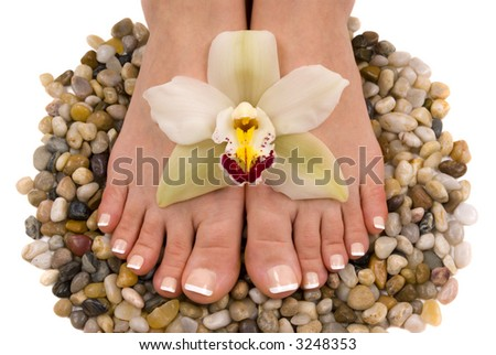 Pedicured feet with beautiful fresh orchid on pebbles - stock photo