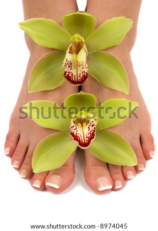 Pedicured feet with beautiful fresh orchids - stock photo