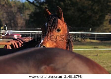 Peek-a-boo Horse - stock photo