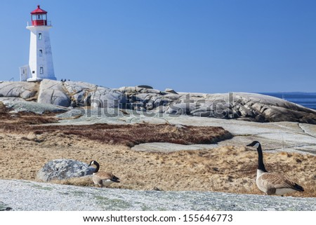 Peggy's Cove lighthouse, Nova Scotia, Canada.  With Canadian Geese in the foreground.  Two iconic Canadian symbols.