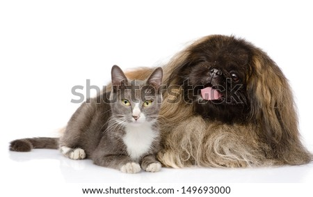 Pekingese and cat together. isolated on white background