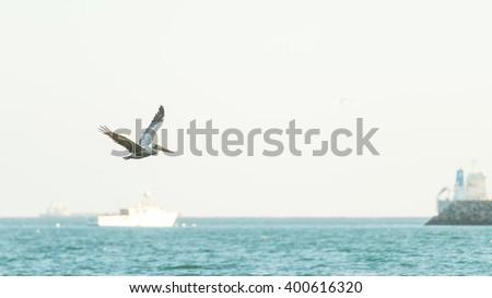 Pelican bird flying over the sea - stock photo