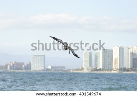 Pelican flying is a pacific coast pelican swooping down towards the water With the cityscape illuminated in the background. - stock photo