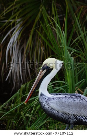 Pelican sitting among palm trees