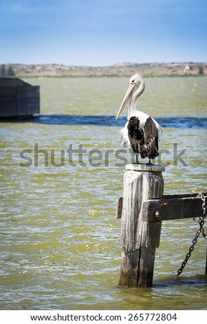 Pelican sitting on old wooden post at the sea shore in South Australia - stock photo