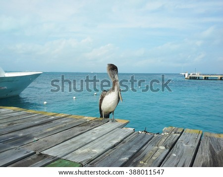Pelican standing on a wooden pier on the Caribbean sea in Mexico