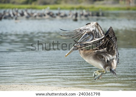 Pelican while flying on cloudy sky background - stock photo