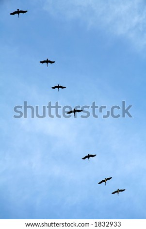 Pelicans flying in formation against a blue sky.