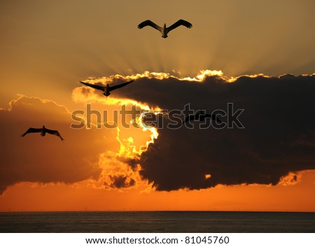 Pelicans flying over water at dawn - stock photo
