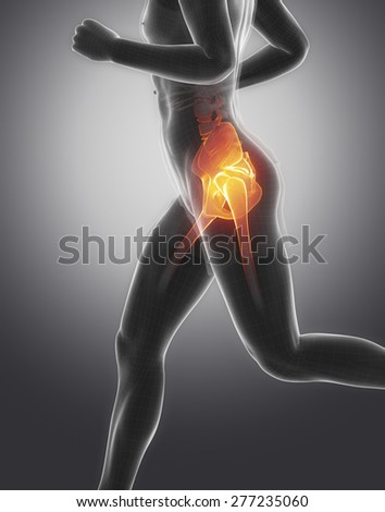 Pelvis anatomy - stock photo
