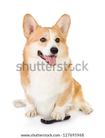 Pembroke Welsh Corgi  dog with a remote control tv. isolated on white background