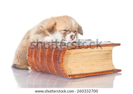 Pembroke welsh corgi puppy sleeping on the old book - stock photo