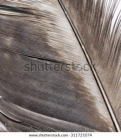 pen feather fragment close up - stock photo