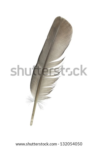 pen feather on a white background isolated - stock photo
