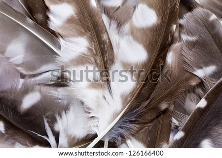 pen feathers of Boreal Owl background close up - stock photo