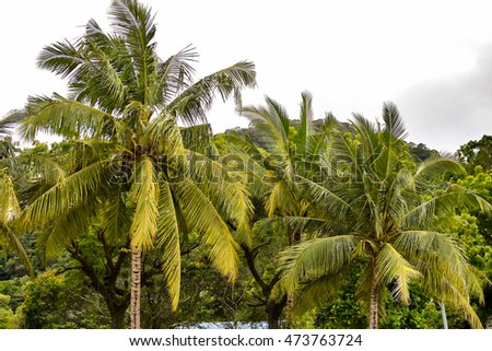 PENANG, MALAYSIA - JULY 21, 2016: Coconut tree swaying to the breeze at the seaside