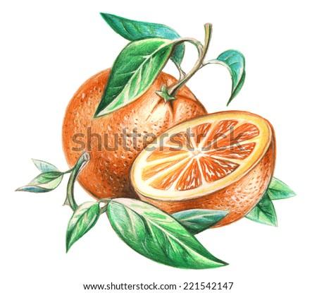 orange drawing stock images royaltyfree images amp vectors
