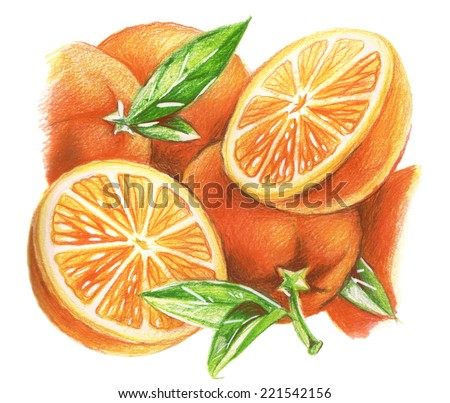 pencil drawing oranges stock illustration 221542156