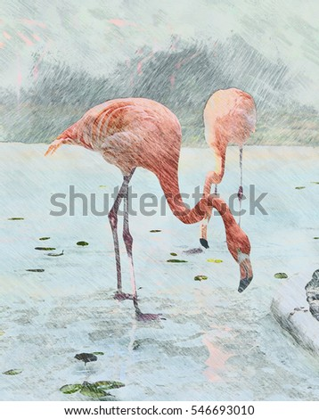 Pencil sketch. Flamingos close up. Imitation hand drawn pictures. Art. Concept design greeting card, banner or poster for decoration interior. Raster illustration