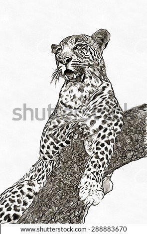 Pencil sketch leopard on the tree - stock photo