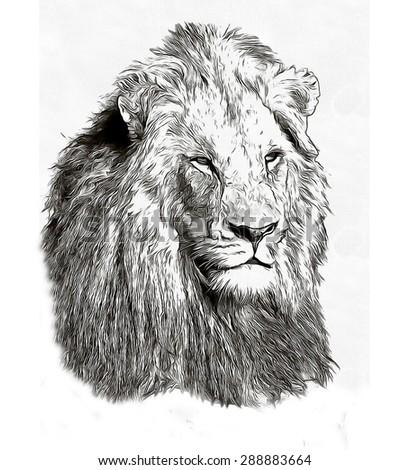 Pencil sketch lion head - stock photo