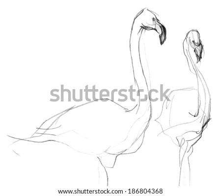 Pencil sketch of flamingos - stock photo