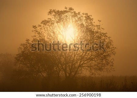 Penetration of sunlight through the branches of a lone tree at misty morning - stock photo