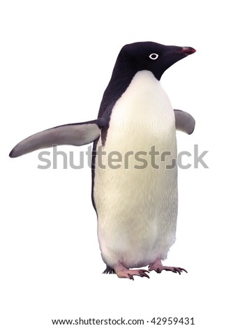 Penguin Adelia isolated over white with clipping path - stock photo