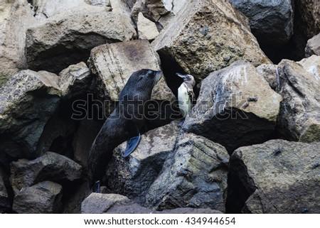 Penguin and Sea Lion - stock photo