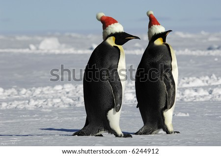 Penguin couple on Christmas - stock photo