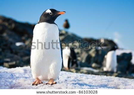 penguin dreaming sitting on a rock, mountains in the background - stock photo