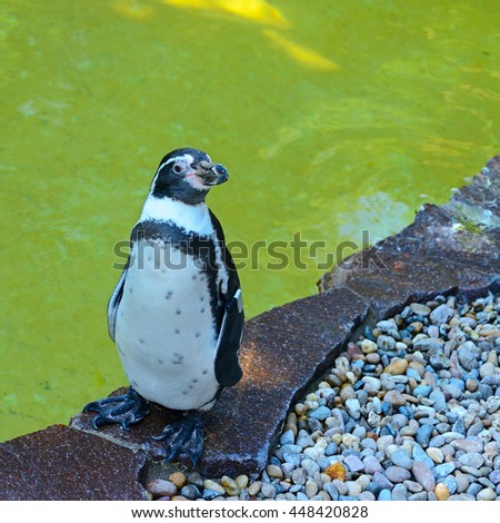 Penguin- flightless seabird of the southern hemisphere, with black upper parts and white underparts