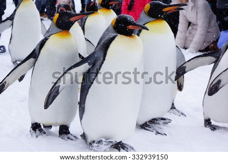 Penguin in the zoo - stock photo