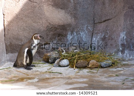 Penguin in ZOO - stock photo