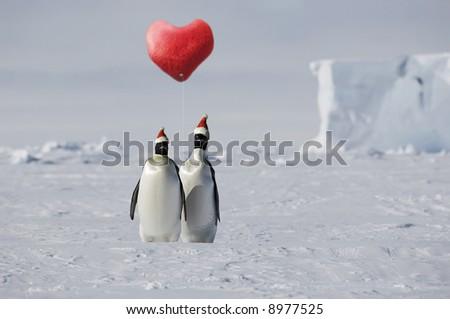 Penguin love - stock photo