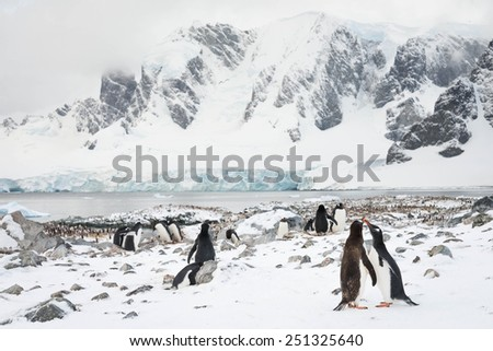 Penguin love in Antarctica