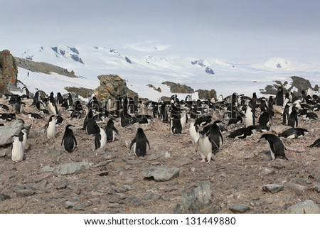Penguins colony on a rock in Antarctica - stock photo