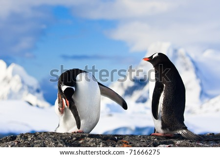 penguins dreaming sitting on a rock, mountains in the background