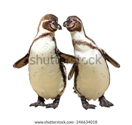 Penguins isolated on white background - stock photo